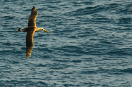 The Albatross that followed the boat one day